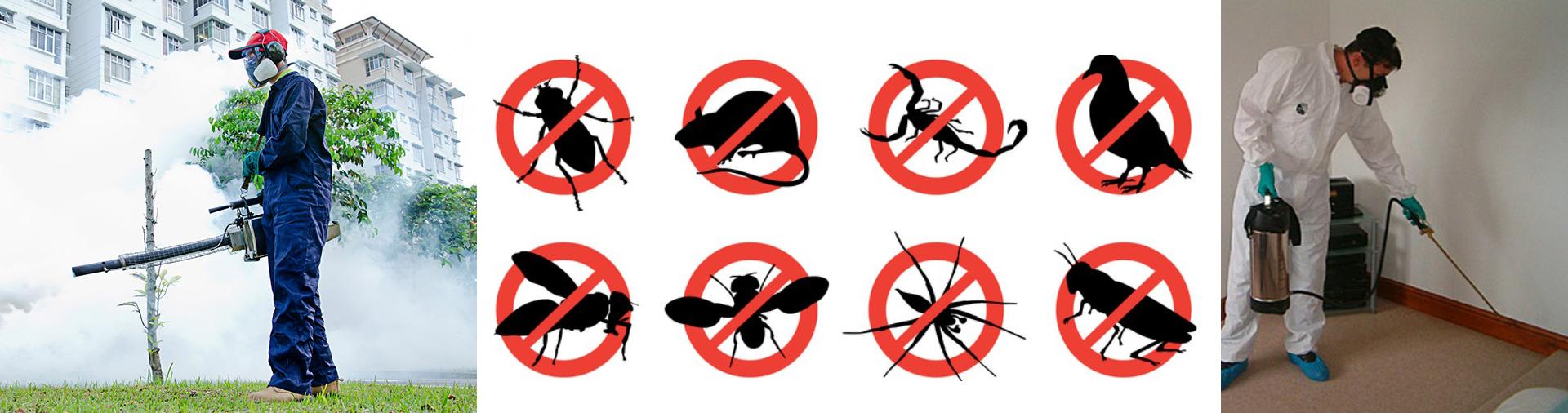 رش مبيدات حشرية بالرياض 0552398100 في المنزل افضل شركة بالدمام بالخبر بالخرج.