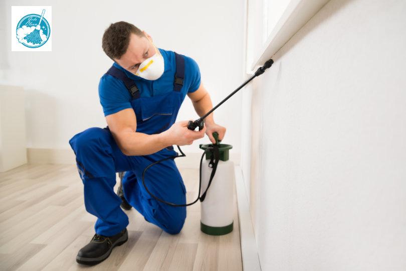 شركة رش مبيدات ببيشه 0552398100 افضل شركات مكافحة الحشرات المنزلية الضارة والتخلص منها بسرعة.