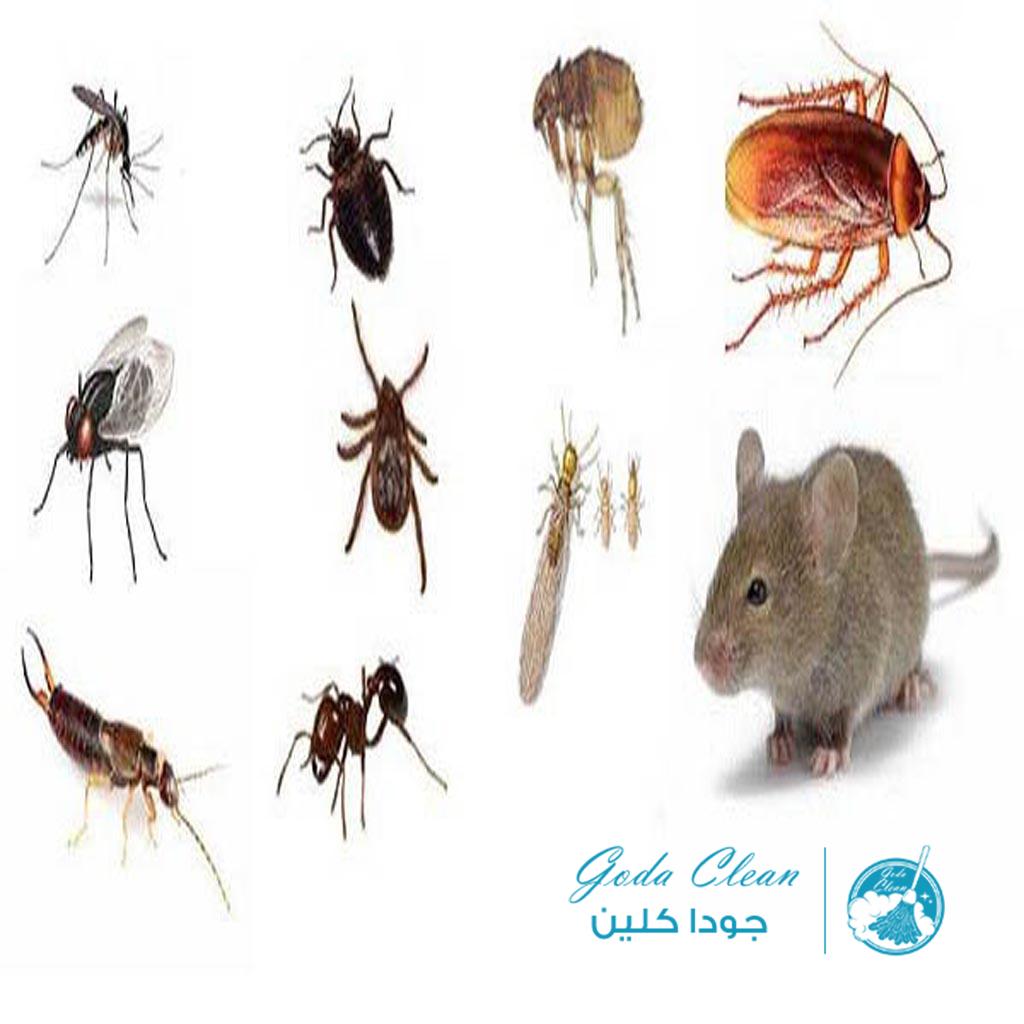 شركة مكافحة البق بالرياض 0552398100 شركة مكافحة حشرات بالرياض